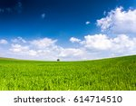 spring field of green wheat... | Shutterstock . vector #614714510