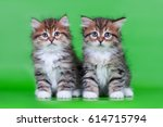 Stock photo siberian kitten 614715794