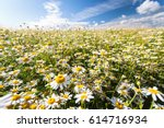 spring field of daisies | Shutterstock . vector #614716934