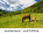 brown mare and it's foal graze... | Shutterstock . vector #614729918
