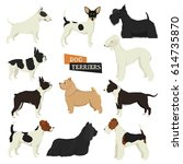 dog collection terriers