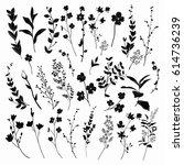 black hand drawn herbs  plants... | Shutterstock .eps vector #614736239