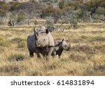A Black Rhino Mother And Her 6...