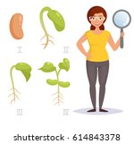 growth stage of  beans.... | Shutterstock .eps vector #614843378