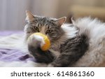 Stock photo cat playing with ball 614861360