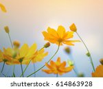 cosmos flowers in the garden... | Shutterstock . vector #614863928