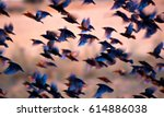 Stock photo flying birds birds silhouettes warm color nature background bird species common starling 614886038