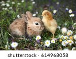 Stock photo bunny rabbit and chick are best friends 614968058