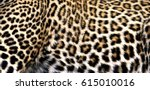 closer look on the pattern of... | Shutterstock . vector #615010016