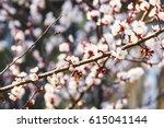 flowering trees in april.... | Shutterstock . vector #615041144