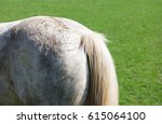 Rear End Of A Horse In A Meadow