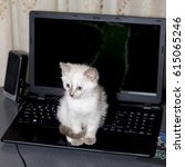 Stock photo blue eyed kitty sitting on a laptop theme kittens 615065246