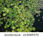 top view of lotus leaf over... | Shutterstock . vector #615089570