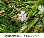 Spring Flowers Series  Iris...