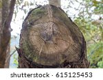 a chopped off tree showing... | Shutterstock . vector #615125453