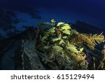 Small photo of French grunts swimming over the Sea star wreak