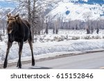 a moose in the winter with snow ... | Shutterstock . vector #615152846