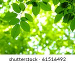 Green Leaves Over Abstract...