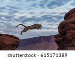 Mountain Lion Jumping Morning...