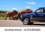 elephants with a baby elephant... | Shutterstock . vector #615189680