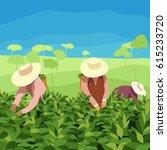 tea picker | Shutterstock .eps vector #615233720