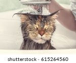 Stock photo cat bath wet cat girl washes cat in the bath 615264560