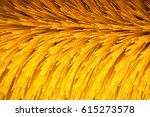 close up shot of a road brush... | Shutterstock . vector #615273578