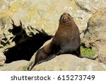 seal | Shutterstock . vector #615273749