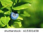 ripe wild blueberries growing... | Shutterstock . vector #615301658
