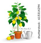 cute lemon tree with its latin... | Shutterstock .eps vector #615314294