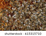 honey bees and natural honeycomb | Shutterstock . vector #615315710