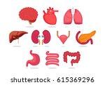 organ vector illustration   Shutterstock .eps vector #615369296