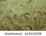 golden ears of wheat close up... | Shutterstock . vector #615410258