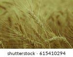 background of golden ears of... | Shutterstock . vector #615410294