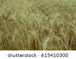 background of golden ears of... | Shutterstock . vector #615410300