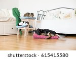 Stock photo cat and dog together in apartments 615415580