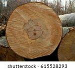 european beech | Shutterstock . vector #615528293