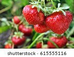 Close Up Of Ripe Strawberry I...
