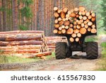 Stock photo the harvester working in a forest harvest of timber firewood as a renewable energy source 615567830