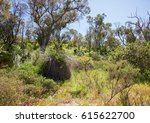 native bushland in the coastal...   Shutterstock . vector #615622700