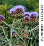 thistle | Shutterstock . vector #615641888