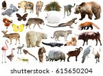 collection of different birds ... | Shutterstock . vector #615650204