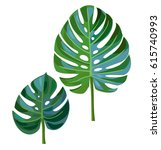 palm  leaves isolated on a... | Shutterstock .eps vector #615740993