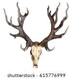 schomburgk's deer head skull... | Shutterstock . vector #615776999