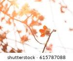 bombax ceiba flowers blooming... | Shutterstock . vector #615787088