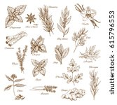 herbs and spices sketches.... | Shutterstock .eps vector #615796553