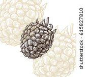 raspberries draw engraving... | Shutterstock .eps vector #615827810
