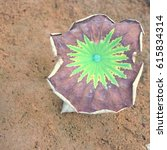 the beautiful lotus flower... | Shutterstock . vector #615834314