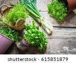 culinary herbs | Shutterstock . vector #615851879