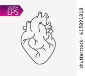 heart anatomy illustration... | Shutterstock .eps vector #615891818